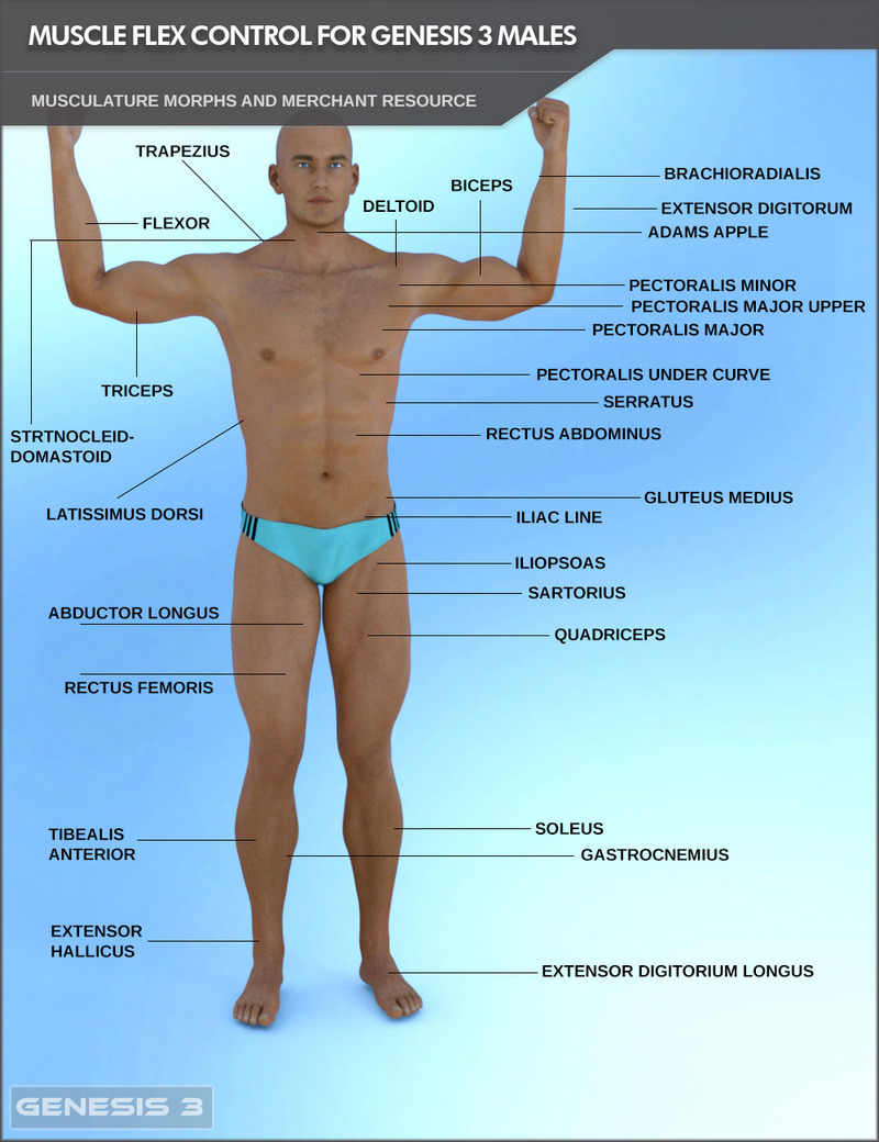 Muscularity Flex Control For Genesis 3 Males And Merchant Resource